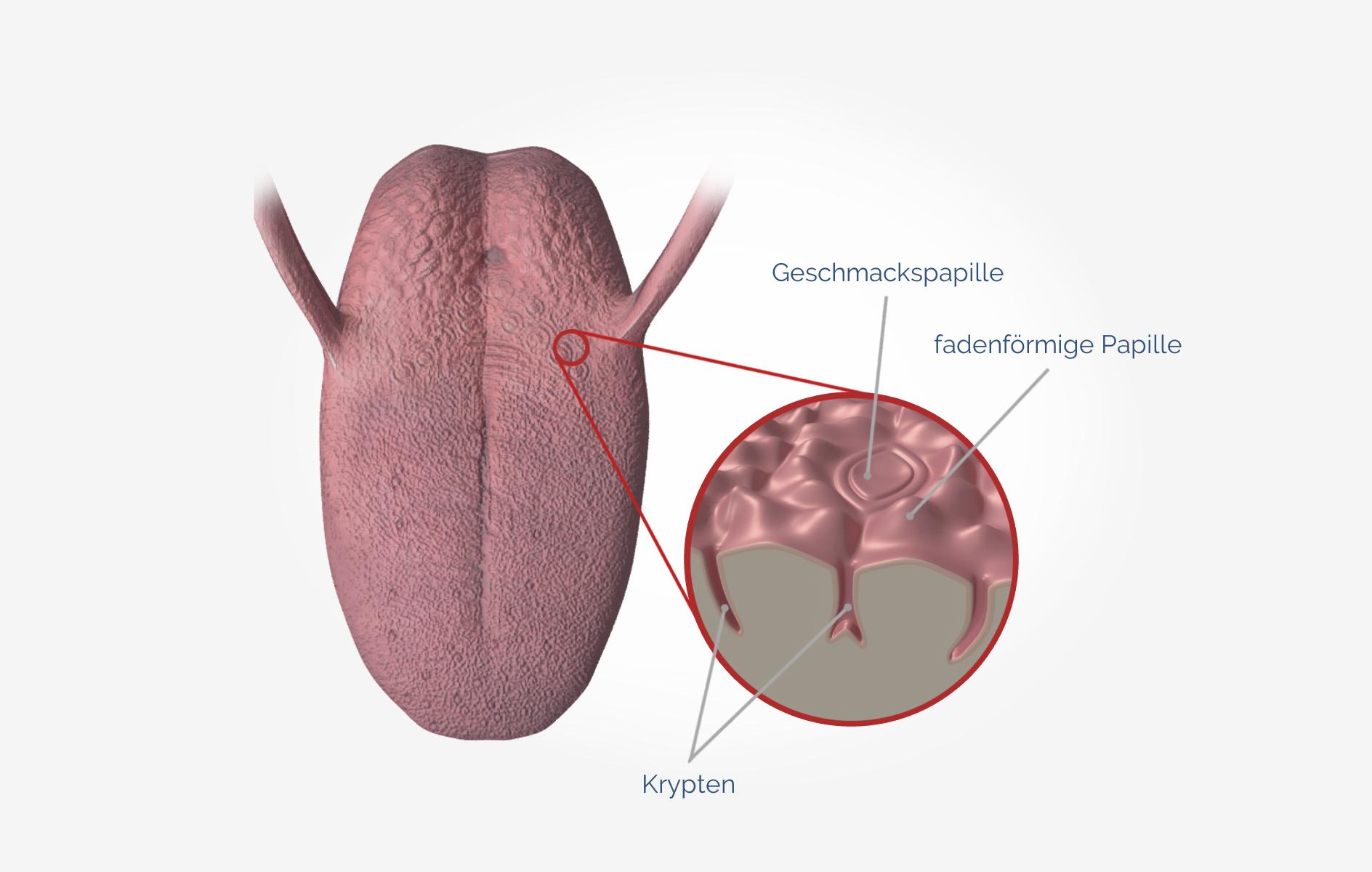 Mundgeruch (Bakterien auf der Zunge)